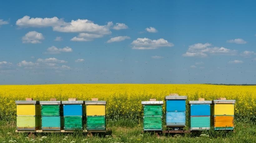 Arnie da proteggere - giornata Mondiale delle api 2021 - Patrizia Volpato sostiene l'iniziativa